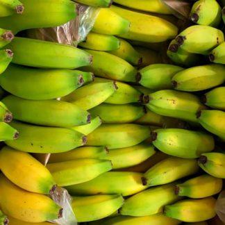 Banano-Uraba
