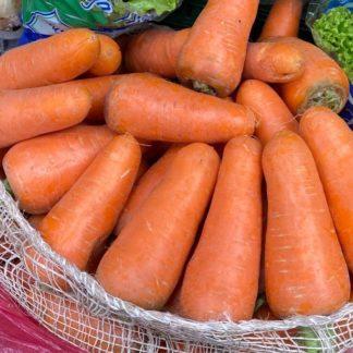 Zanahoria gruesa