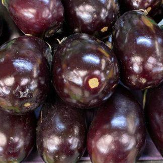 eggplant-lb-paloquemao