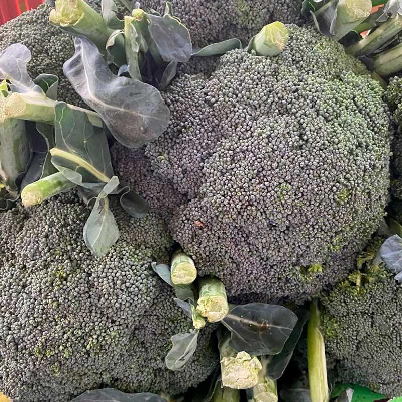Brocoli-paloquemao