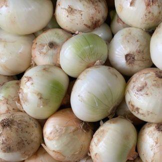 Cebolla-cabezona-blanca