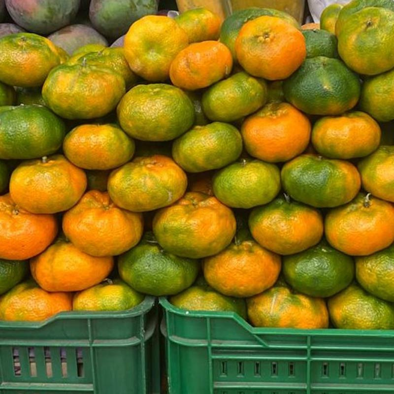 Mandarina-arrayana--docena-paloquemao