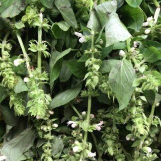 basil-bunches-paloquemao