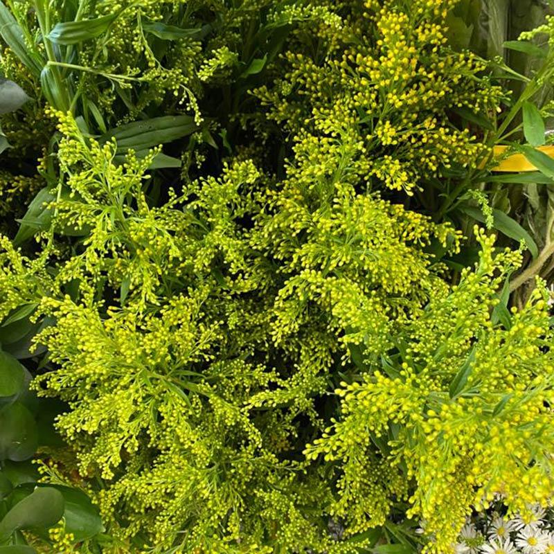 follaje-para-flores-3-paquete-paloquemao