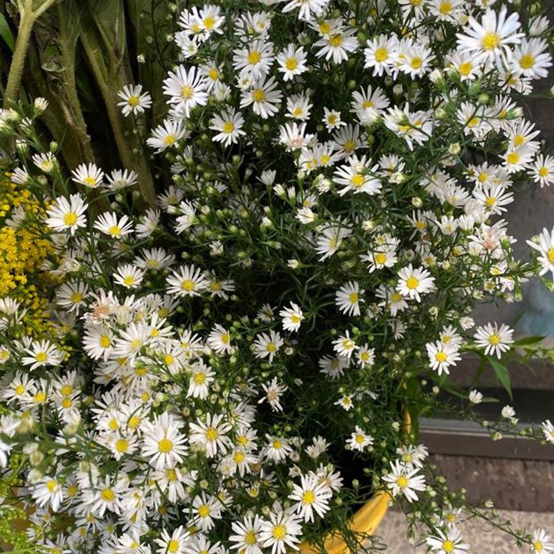 follaje-para-flores-4-paquete-paloquemao