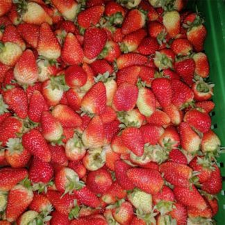 Big Strawberries - Plaza de Paloquemao