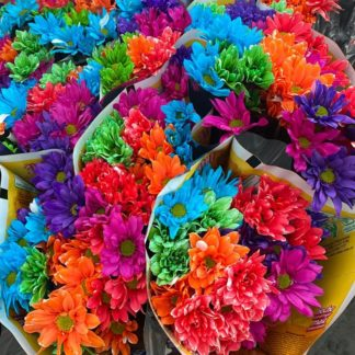 margaritas-de-colores-paquete-paloquemoa