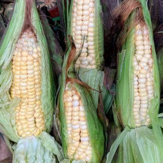 colombian-corn-unit-paloquemao