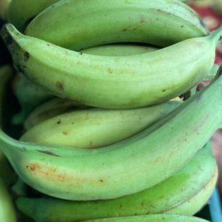 green-plantains-unit-paloquemao
