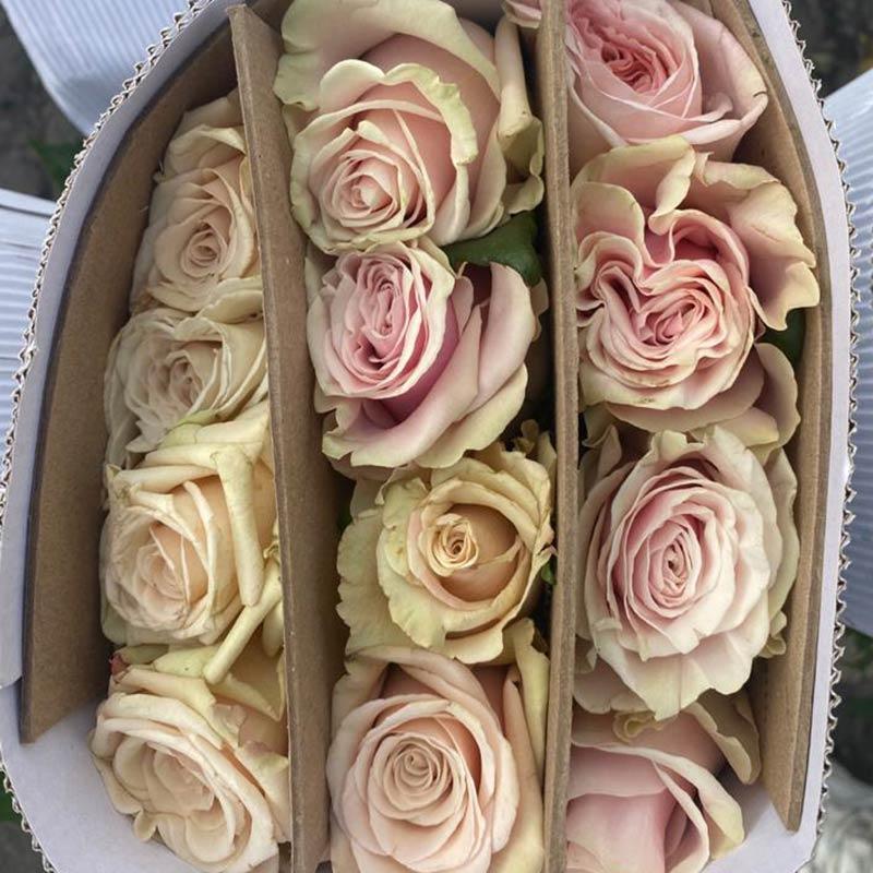 rosas-blancas-paquete-paloquemao