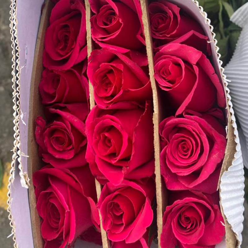 rosas-rosadas-paquete-paloquemao