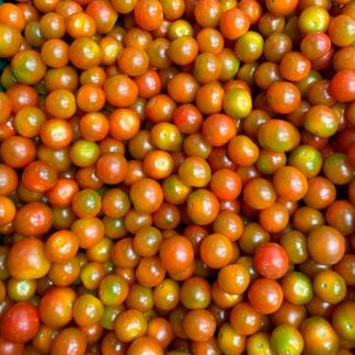 tomate-cherry-paloquemao