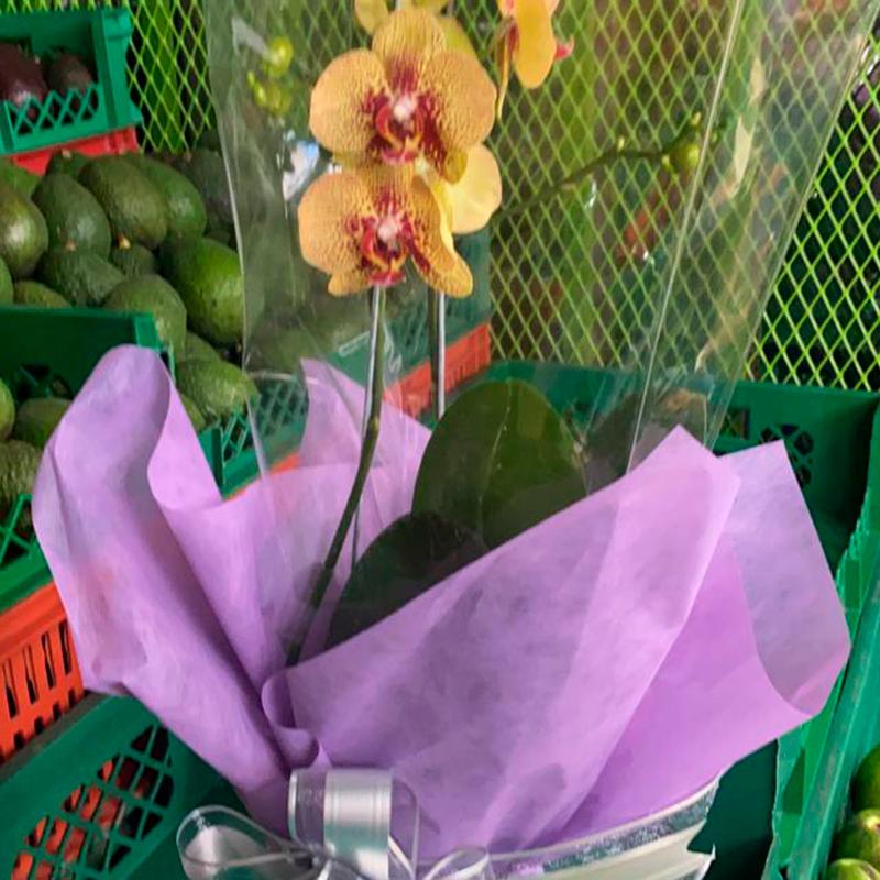 Orquidea-paloquemao