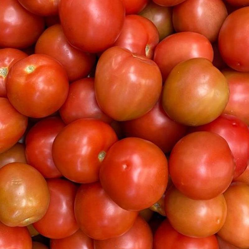 Tomate-chonto