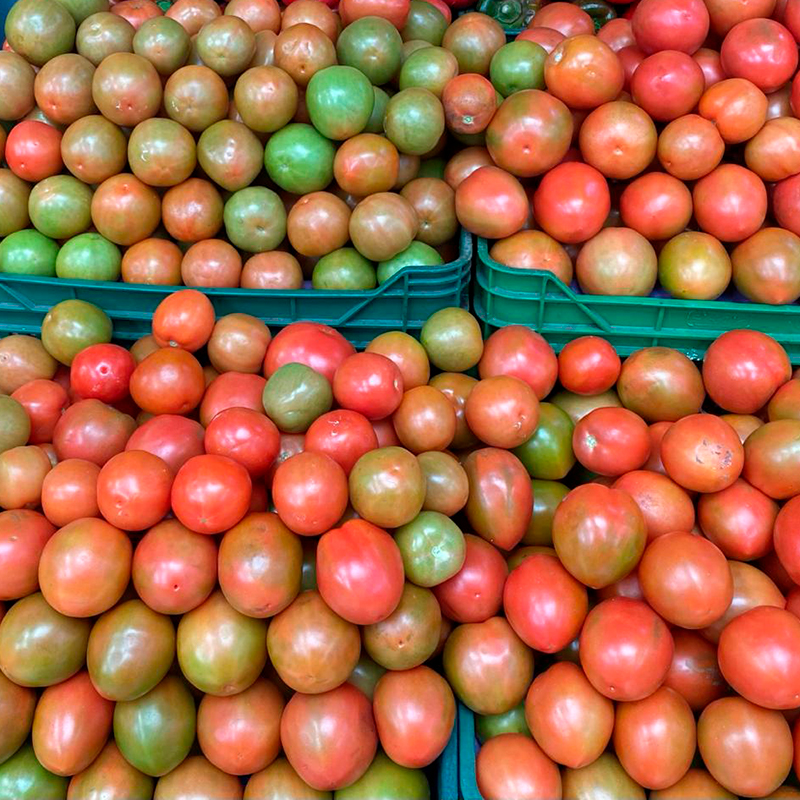tomate-chonto-paloquemao