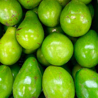 Aguacate-Papelillo