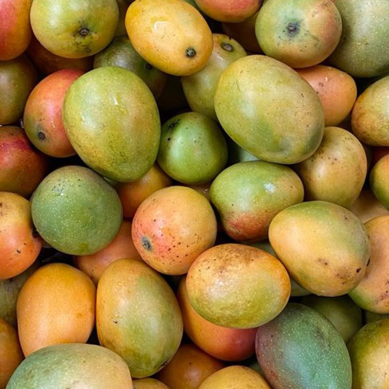 Mango-de-azucar