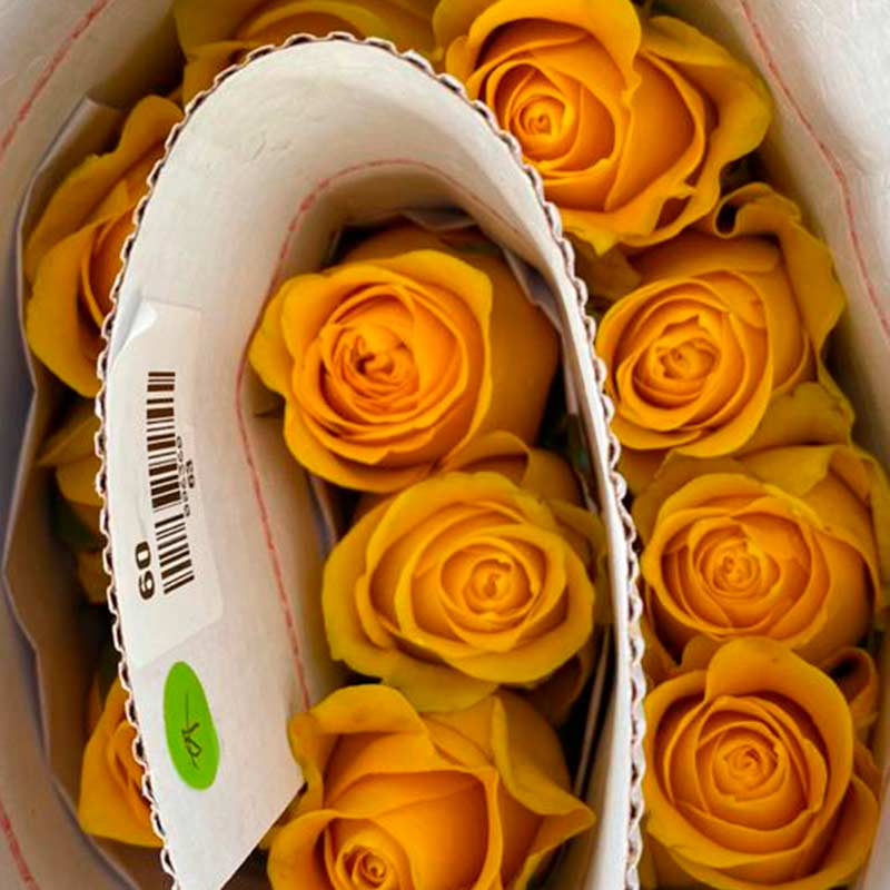 Rosas amarillas -paquete-paloquemao