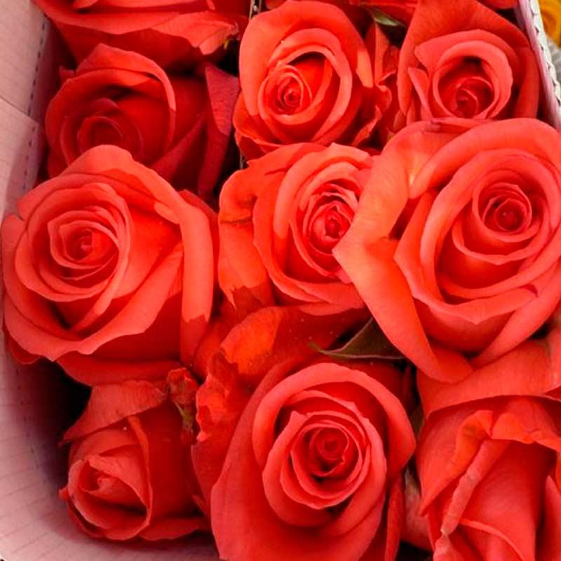 Rosa-Salmon-paquete-paloquemao