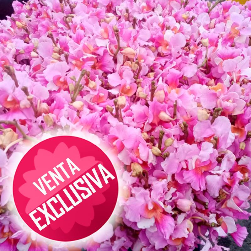 Orquídea-hawayana---docenaa-venta-exclusiva