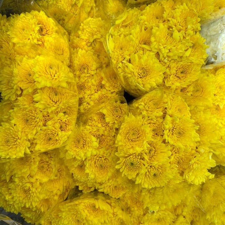 Pompón-amarillo-paloquemeo
