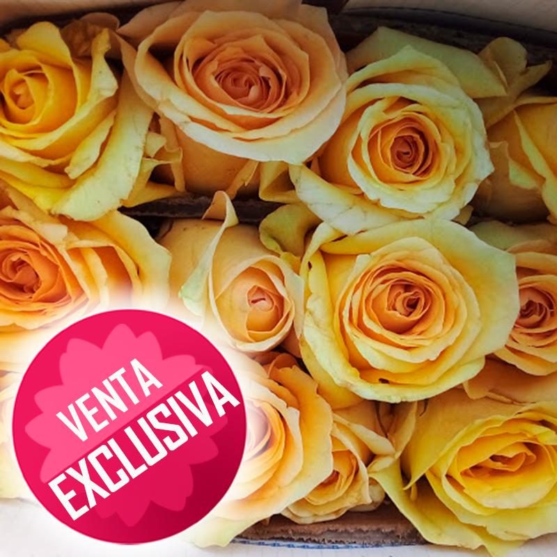 Rosa-amarillo-claro-venta-exclusiva