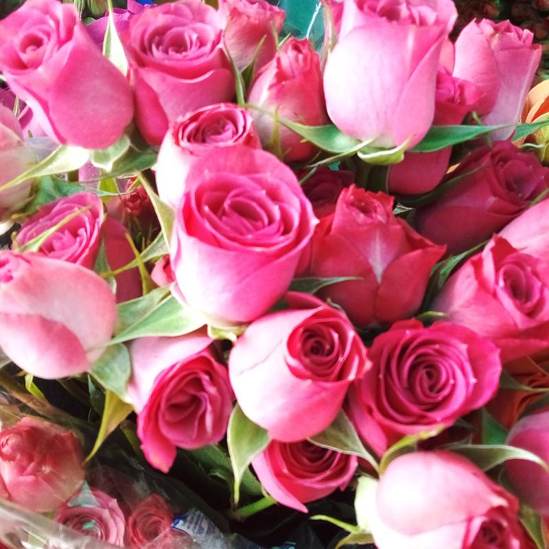 Rosa mini color rosado venta exclusiva