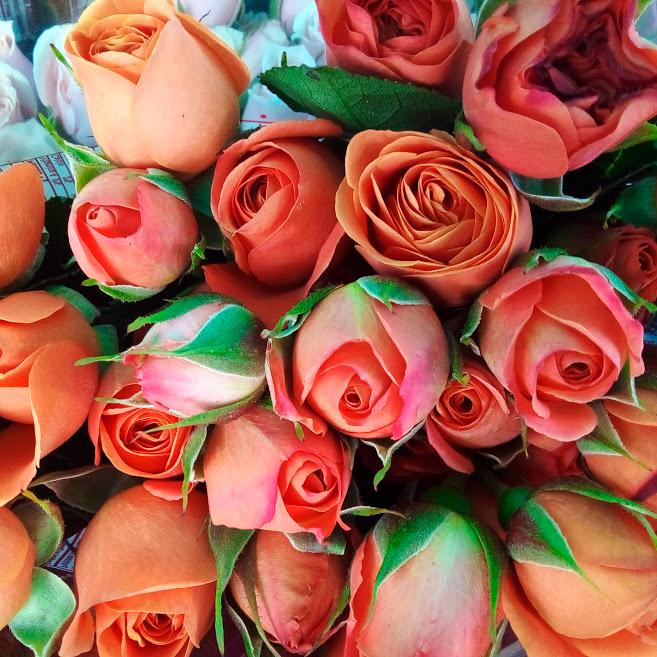 Rosa mini color salmón venta exclusiva