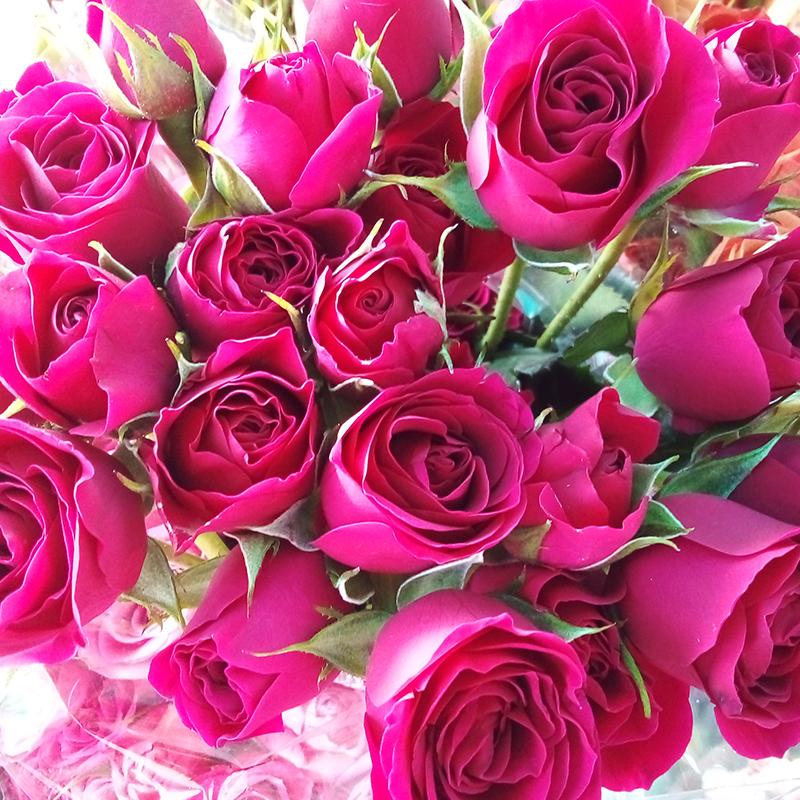 Rosa mini color violeta venta exclusiva