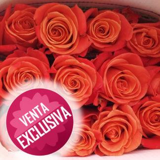 Rosas Salmón x 24 - Calidad exportación -