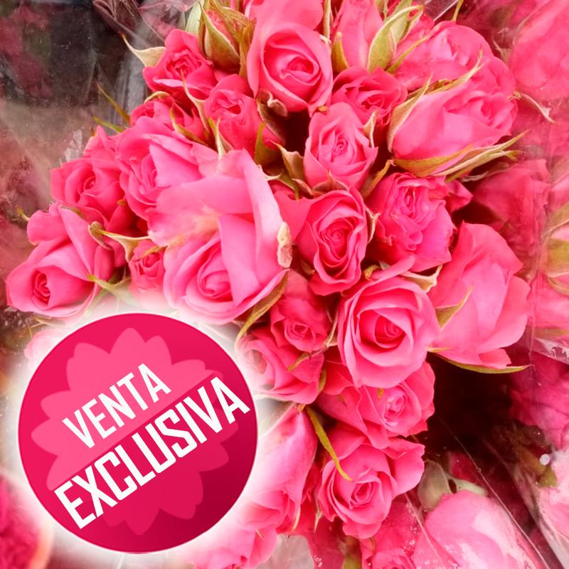rosas-mini---paquete-venta-exclusiva